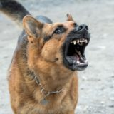 Agresywny pies – jak to możliwe?