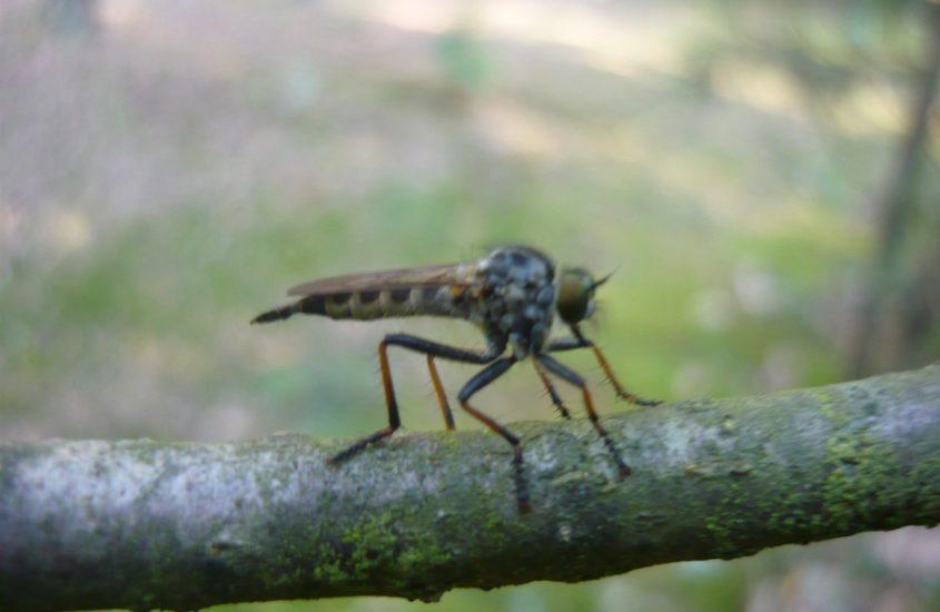 Ach te komary – plaga komarów szkodliwa nie tylko dla ludzi