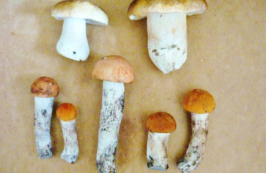 Idziemy do lasu – jak zbierać grzyby?