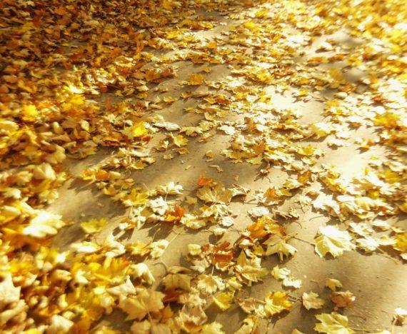 jesień i zima