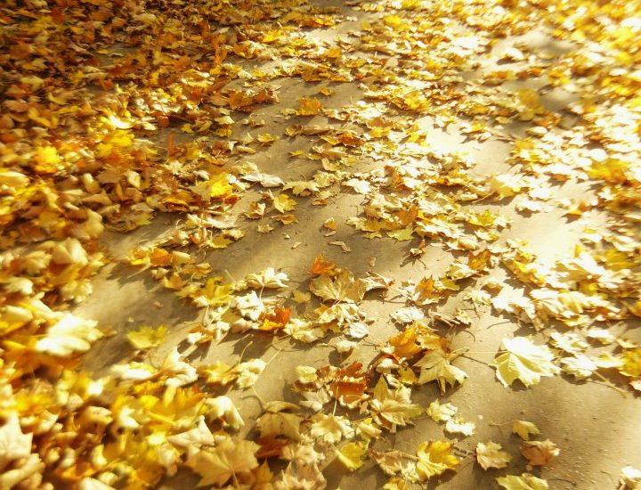Jesień i zima – ten trudniejszy czas w roku